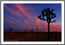 Buring Sky at Joshua Tree N.P.